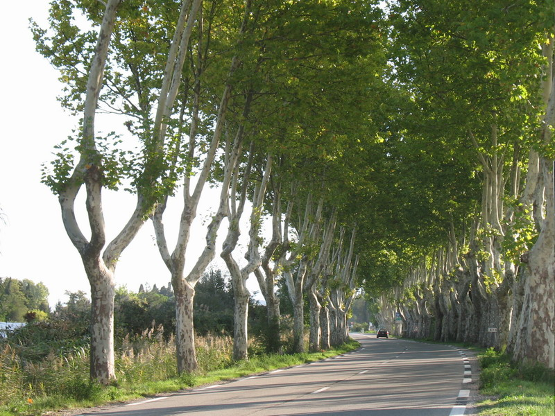 St_Remy_tree-road.jpg